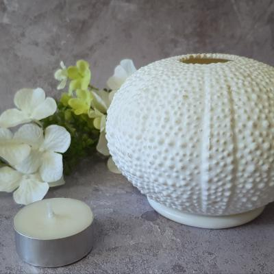 east of india sea urchin tealight